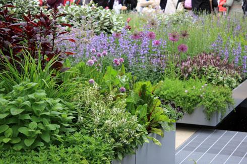 Allium petit paysagiste for Au jardin conseil